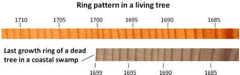 tree ring dating history png 1291x405